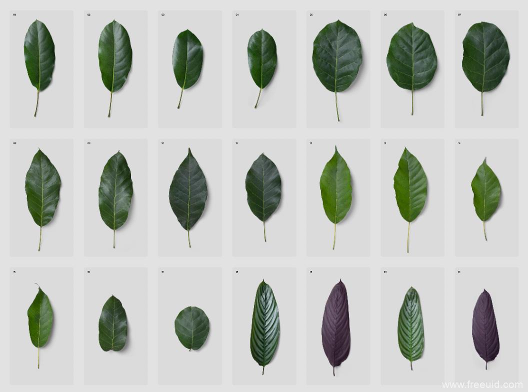 植物-各种植物叶子展示素材psd源文件下载-2